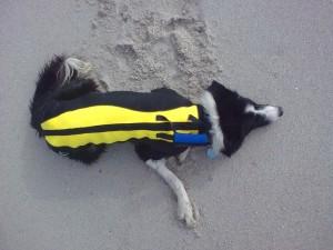 Wetsuit survey Cape Town surf spots